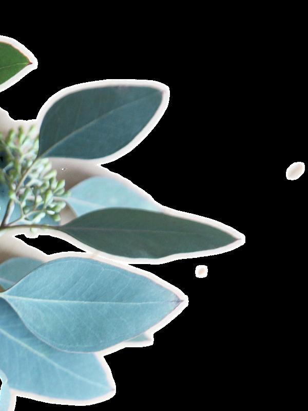 eucalptus 2 e1590922120812